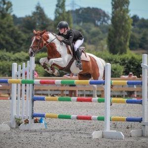 Horse for sale: Galaxy Samurai