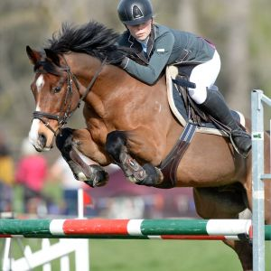 Horse for sale: Talented All Rounder
