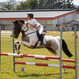 Horse for sale: My Geronimo (Bounty)