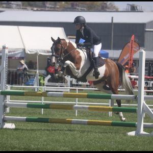 Horse for sale: Super SJ pony