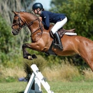 Exceptional Multi-disciplined Pony!