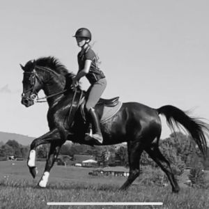 Stunning all rounder pony