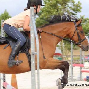 competitive pony