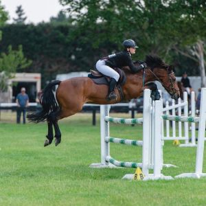 Special Pony Seeking Competitive Soulmate