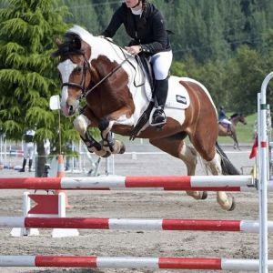 Horse for sale: Safe, genuine allround superstar!