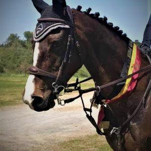 Horse for sale: Grand Prix Pony