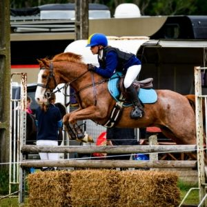 Multi-Purpose PC, Show Jumper, Eventer, Best Friend