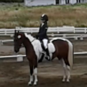 Great competitive all round pony
