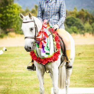 Windrush Digby All round Saddle Hunter pony