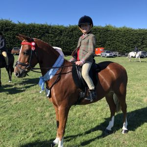 Horse for sale: PUREBRED WELSHY - WONDERFUL CHILD'S PONY