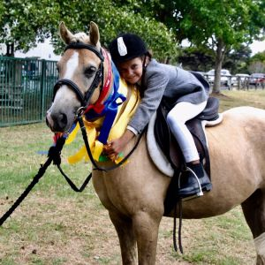 Cute all rounder- a true treasure!  Kind, easy young pony, beautiful inside and out.