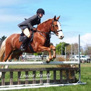 PGP potential, super hunting Pony