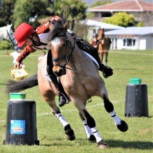 Horse for sale: Fantastic Eventer/All Rounder