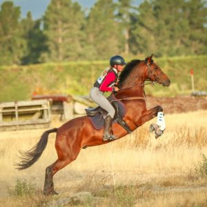 Suberb Potential any discipline - Full Height Pony