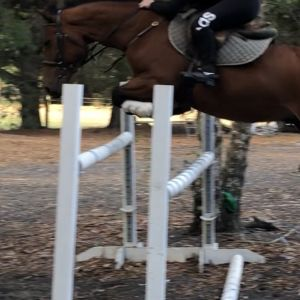 One in a million full height pony