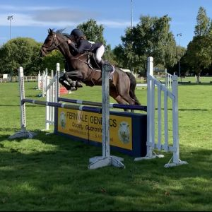 Horse for sale: SERIOUS SHOW JUMPER