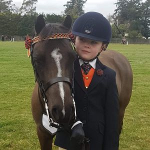 Horse for sale: POSSIBLY BEST EVER WELSHY IN NZ