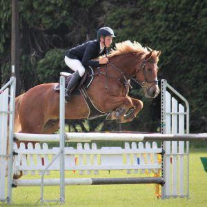 Horse for sale: Super Versatile Golden Boy