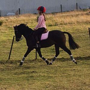 Gorgeous 123cm pony