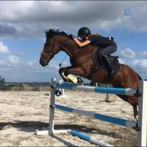 Horse for sale: Competitive & Safe Showjumper/All Rounder