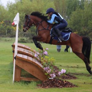 Exceptional Multi Talented Small Pony