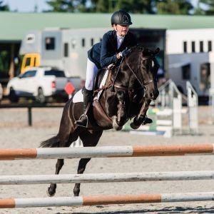 Horse for sale: Superstar All Rounder Pony