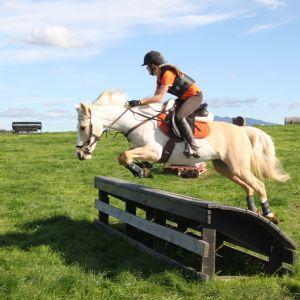 Stunning all-round pony