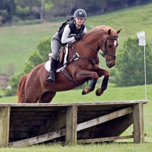 Amazing All round 14hh 7yr old