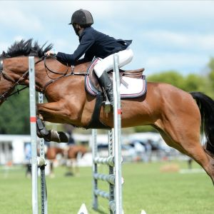 Superstar Hunter/Allround Pony