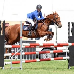 Horse for sale: Top SJ Pony