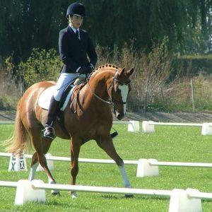 Top quality show/dressage pony