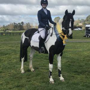 Talented competitive young pony
