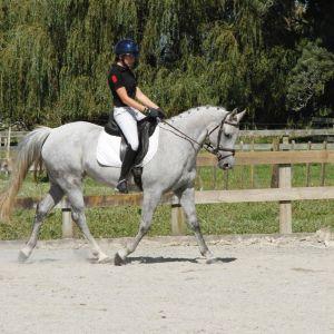 Stunning Dressage Pony, Potential Jumper