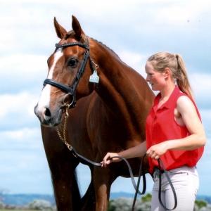 CD Sport Horses