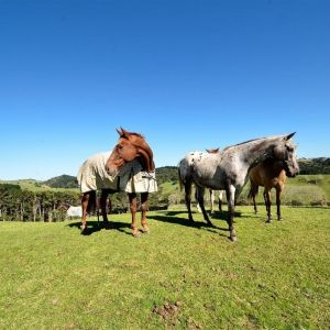 Bare Land Waimauku Auckland