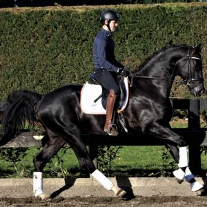 Stallion at Stud - JHT Anatomy