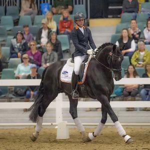 Stallion at Stud - HP Fresco