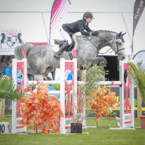 Stallion at Stud - Numero Uno Xtreme