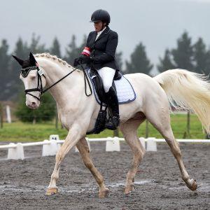 Stallion at Stud - Ikarus GF