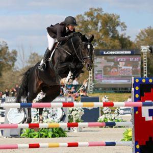 Stallion at Stud - Euro Sport Centavos