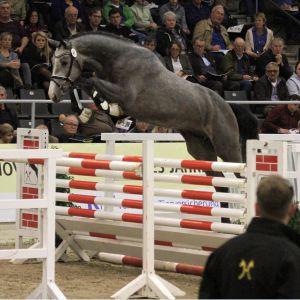 Stallion at Stud - Euro Sport Diamant B