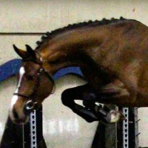 Stallion at Stud - Euro Sport Kalaska