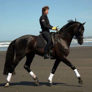 Stallion at Stud - Vollrath Lessing