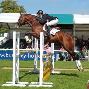 Stallion at Stud - Timolin (UK)