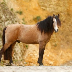 Stallion at Stud - Diago VWNZ