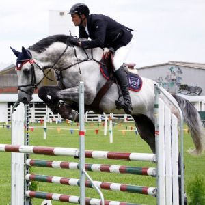 Stallion at Stud - Chacco Silver