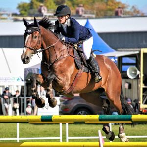 Horse for sale: Stunning School Master
