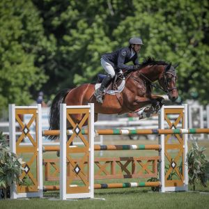 Horse for sale: Zoe - ** Euro Sport Centavos x Karma (TB)