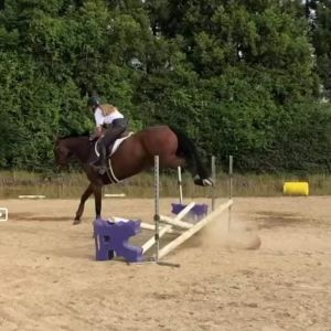Athletic 6yo Lindberg Mare