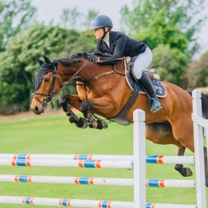 Horse for sale: Do you want to win Ribbons?